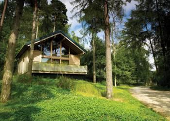 Keldy Forest