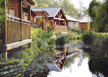 Tilford Woods, Farnham,Surrey,England